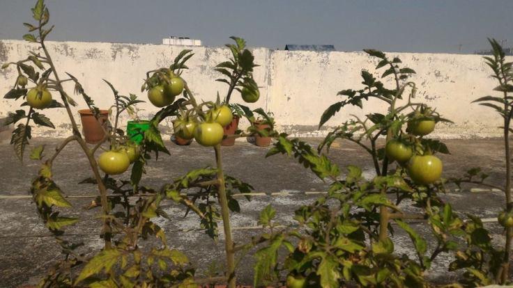 wgic terrace garden mahesh